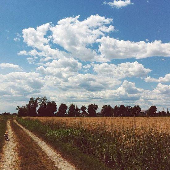 Walking 🐾 Tb Latergram Igersitalia Italiansummer Spanador Golden Landscape Walking Countryside Igersmilano Sky Clouds