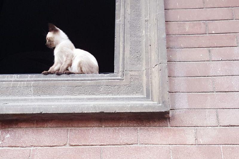 Gattini Cats