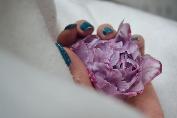 Bloom Blooming Flower Springtime Spring Flowers Purple Flower Head Human Body Part Human Hand Springtime Nature Close-up Tulpe