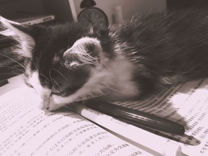 Too tired to study Indoors  Domestic Animals Pets Mammal Animal Themes One Animal Close-up Day Tired Sleeping Sleeping Cat Book Pen