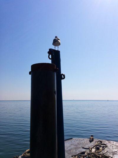 Seagull(s) on
