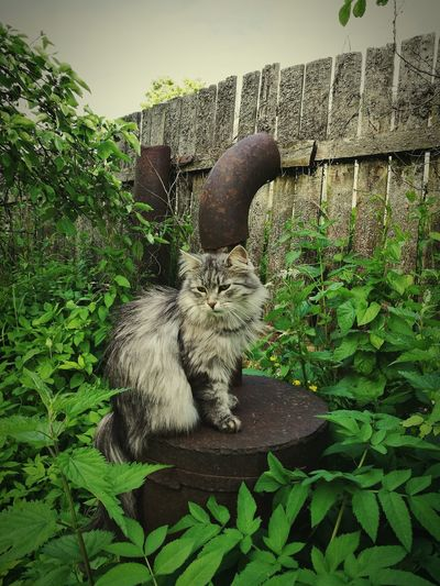 Cat sitting on plant