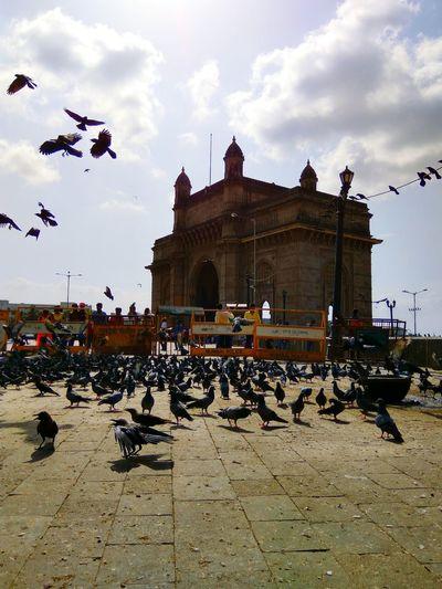 Taking Photos The Architect - 2016 EyeEm Awards Gatewayofindia in Mumbai My Favorite Place Myfavoriteplace
