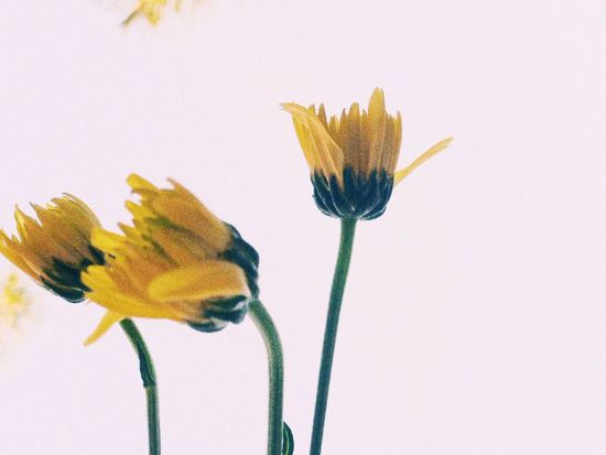 Yellow Flower Nature VSCO Vscocam Flowers SmallFlowers IPhoneography สลั่ว