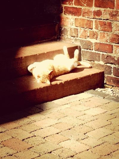 adoring the sunshine..