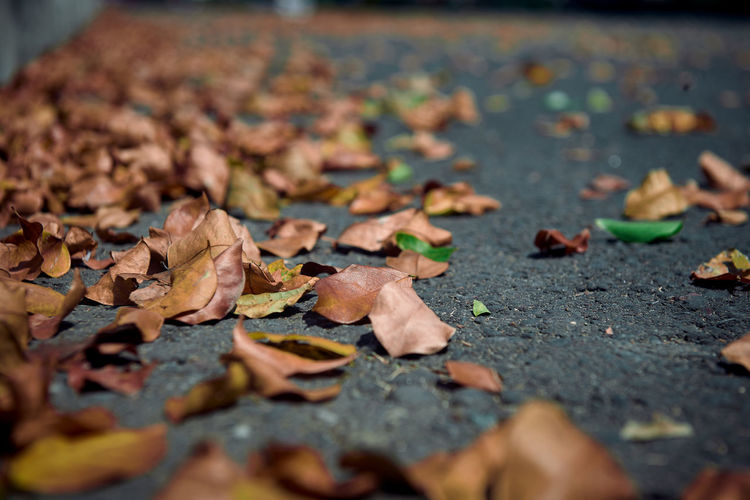 Close-up of dry maple leaves on footpath