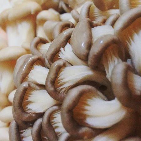 queria cair em shimejis gigantes. Cooking Cogumelo Mushroom Shimeji Funghi Cozinhando Sextafeira