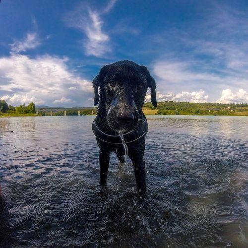 Portrait of black dog in water against sky
