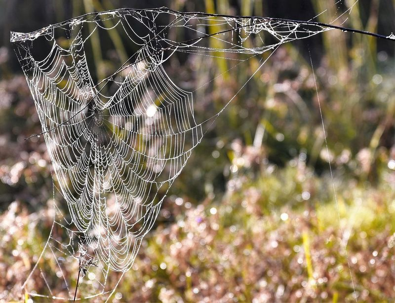 Morning's web Spider Web Fragility Close-up Beauty In Nature Outdoors Animal Themes Web Day Taking Photos Enjoying Life Relaxing