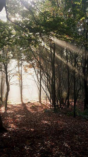 Baarnse kom Baarn Forest Nature Baarnsekom Baarnsebos Wood