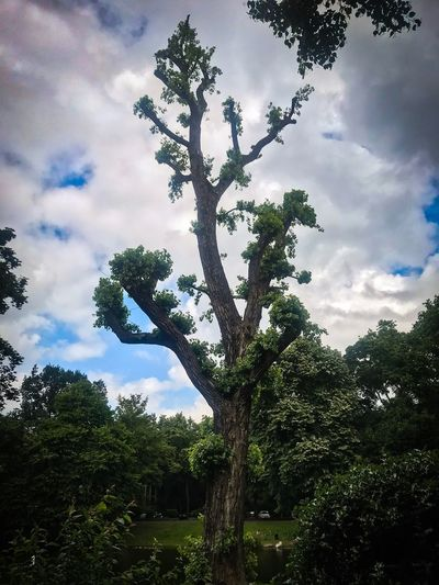 Tree Plant Sky Cloud - Sky Growth Low Angle View Nature No People Beauty In Nature Plant Part Leaf Green Color Outdoors