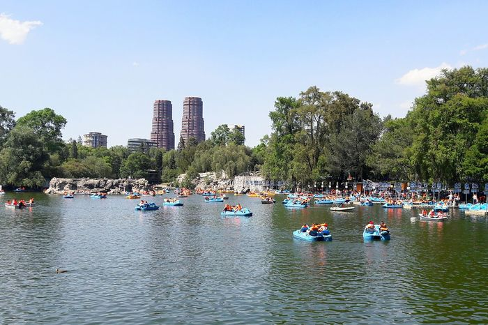Water Tree Lake Pedal Boat Day Outdoors Mexico City Mexico Chapultepec CDMX Colour Your Horizn This Is Latin America