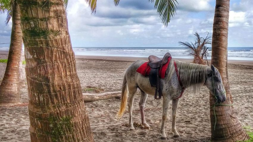 Sea Sand Tree Horse Outdoors Working Animal Horizon Over Water Nature No People Beach Photography Beauty In Nature PalmsTrees Enjoying Life Smartphonephotography