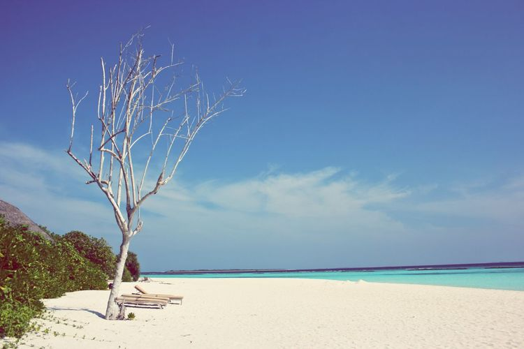 Maldives Tree Travel Lifestyle Beach Mood Blue