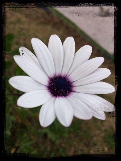 Marmaris Turkey Nature Flowers