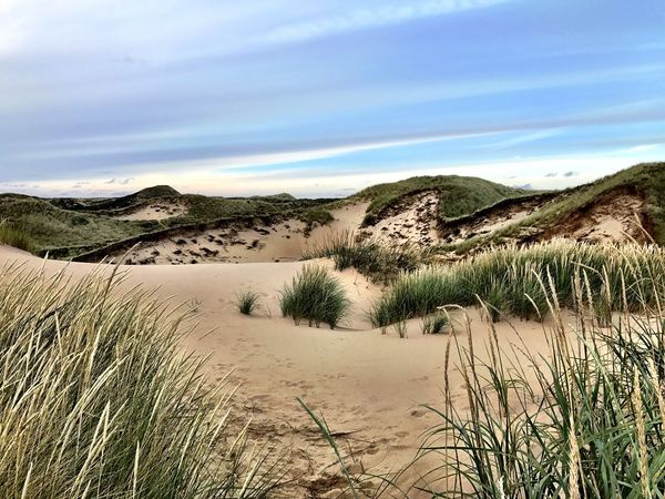 Grass Nature Tranquil Scene Sand Dune Tranquility Landscape Sky Scenics Sand Marram Grass Beauty In Nature Outdoors Day No People Desert Cloud - Sky Arid Climate Plant Beach Water Sylt Germany Dunes Nature Photography Travel Destinations
