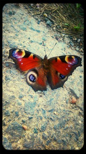 Butterfly Natre Love Beauty