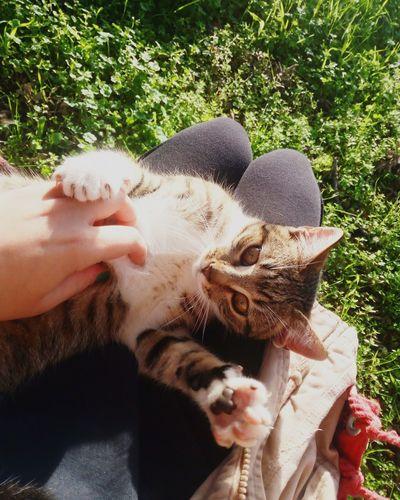 Cuddles Cat