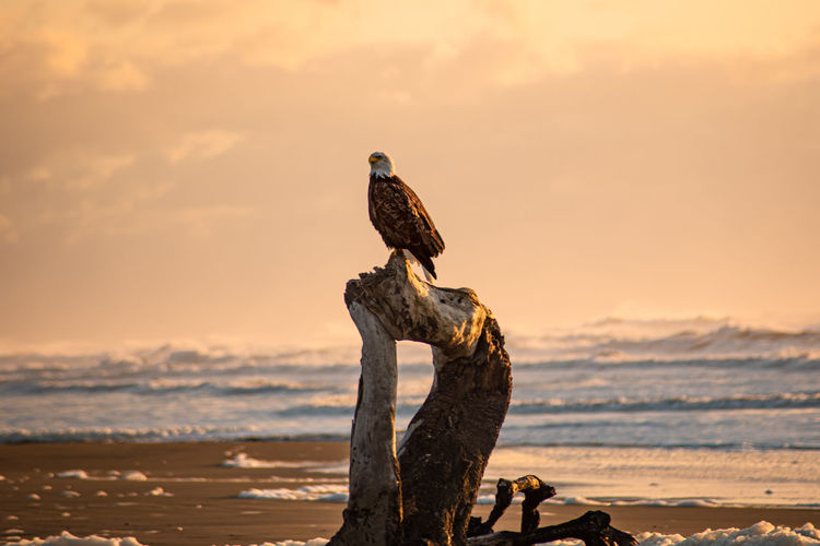 Bird perching on wooden post at beach against sky