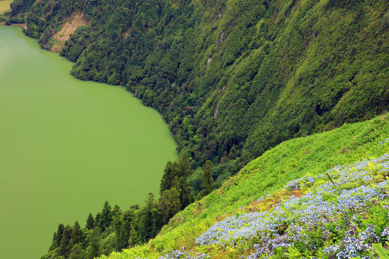Alpine Azores Azores Islands Green Green Color Hortensia Landscape_Collection Road Sao Miguel Sao Miguel- Azores Sete Cidades Travel Travel Photography Azores, S. Miguel Day Hortensia Flower Landmark Landscape Landscape_photography Nature No People Outdoors Roadtrip Sete Cidades Azores Travel Destinations