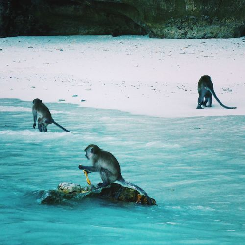 Monkey Beach, Phi Phi Islands 🙉🙊🙈 Monkeys Beach Thailand PhiPhiIslands Sea