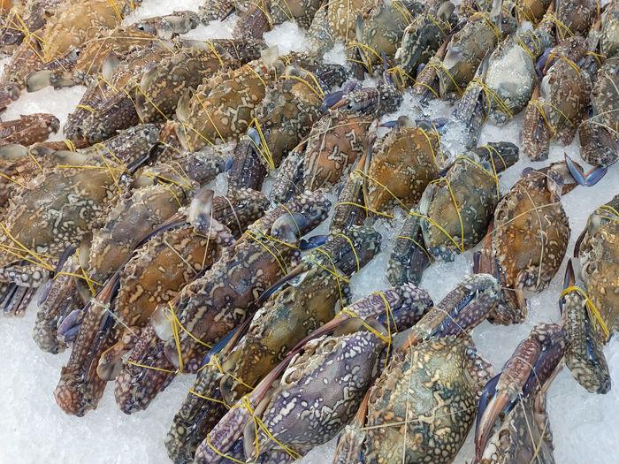 Fresh Thai Crab