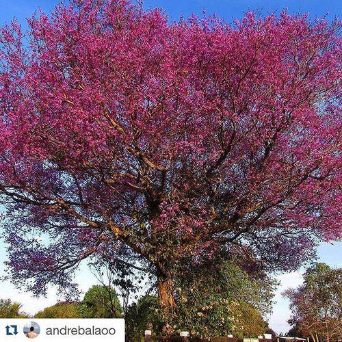 ☆Barra do Bugres-MT☆ Foto: @andrebalaoo _______________________________ BarradoBugres Matogrosso MatoGrosso_Brasil CentroOeste Bresil  Brasilien Brasil Brazil Southamerica World IloveBrazil VisitBrazil VejaMatoGrosso MtcomVc DestinosTuristicosMT Magnifique Travel BrasilSensacional Paisagens Campo MatoGrossoéLindo Love Instagram Photo