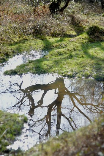 Reflection St Leonards Forest Branch Branches And Sky Nikon Puddle Reflections Puddle Reflection No People EyeEmNewHere EyeEm Nature Lover Beauty In Nature Wood Westsussex Vintage Lens Helios Water Tree Grass Countryside Puddle Tranquility Calm Idyllic Plant Life Swamp Non-urban Scene Tranquil Scene