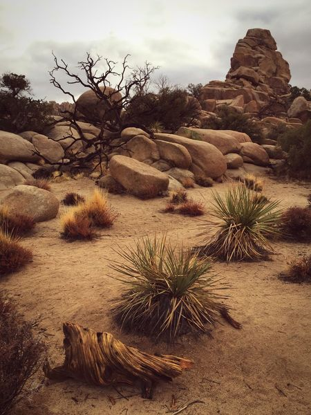 How Do You See Climate Change? The Hidden Valley Joshua Tree National Park Iphone6 Landscapes With WhiteWall The KIOMI Collection