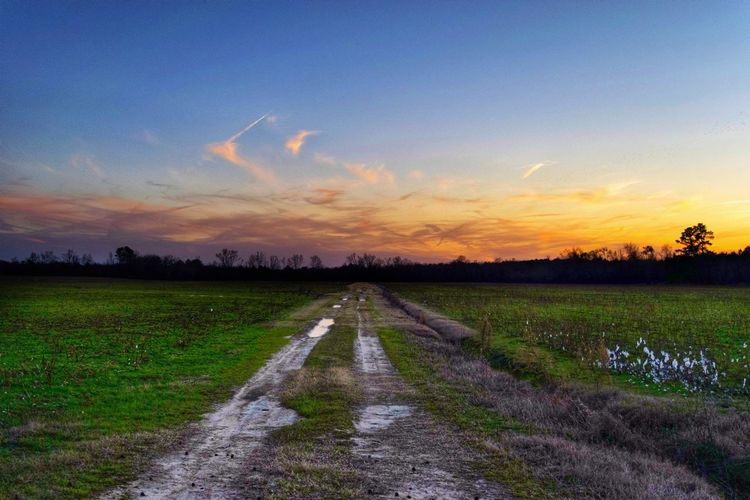 Sunset Drive Rural Scene Sunset Agriculture Water Field Crop  Tree Farm Sky Landscape vanishing point Diminishing Perspective Pathway