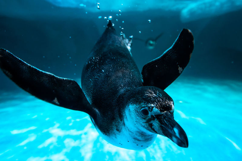 Aquarium Rio, Moscow, penguin, shark, people, children, birds, sea cat, monkey Animal Animal Head  Animal Themes Animals In The Wild Bird Close-up Danger Enjoyment Fish One Animal Part Of Relaxation Relaxing Sea Life Side View Swimming Underwater Wildlife Zoology