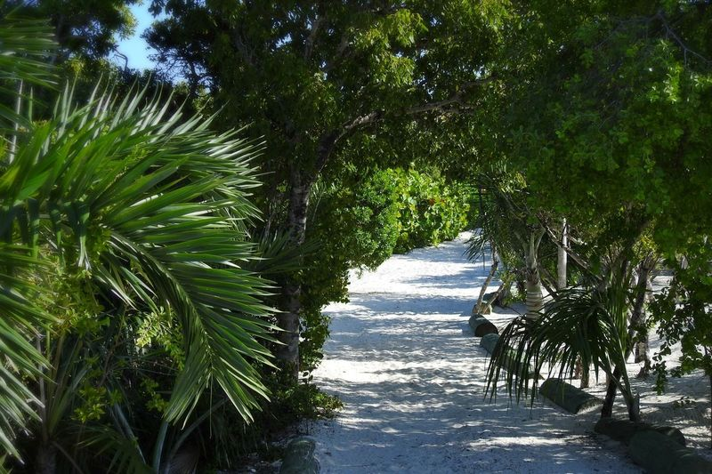 Sandy Pathway To Paradise Half Moon Cay Bahamas Trees Peaceful Tranquil Scene Beauty In Nature Landscape Photography