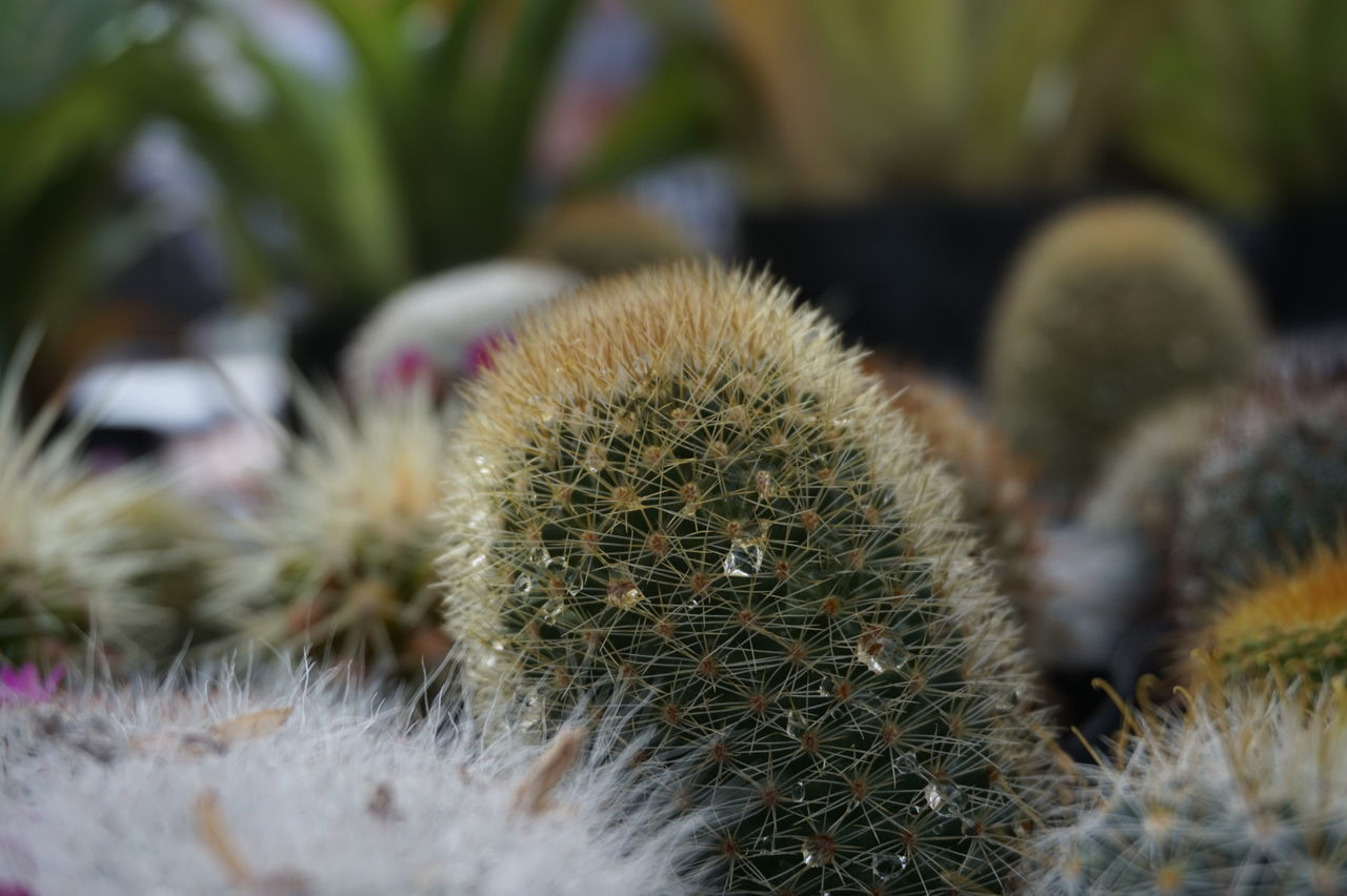 Close-Up Of Cactus Plants In Botany