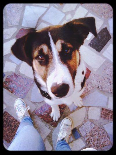 Best good morning look ever :) Goodmorning World  Dog Love MyDog💓 Somuchlove