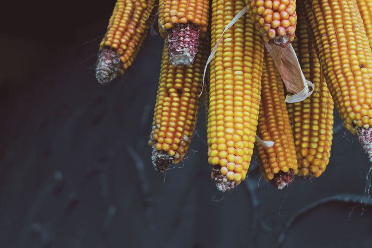 Agriculture Close-up Corn Corn - Crop Corn On The Cob Day Focus On Foreground Food Food And Drink Freshness Healthy Eating High Angle View Minimalism Nature No People Outdoor Photography Outdoors Raw Food Still Life Summer Sweetcorn Vegetable Village Life Wellbeing Yellow