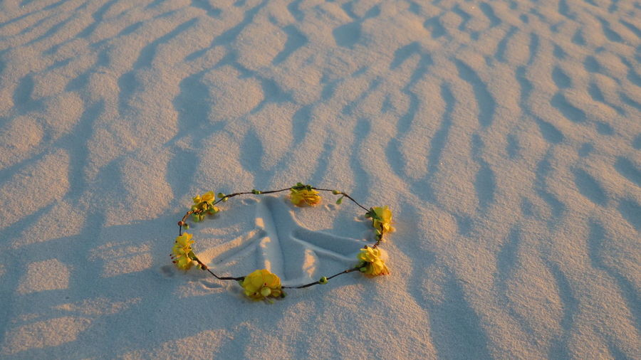 Art Beauty In Nature Close-up Creative Day Elevated View Flower Flower Halo Flower Power Flowers Fragility Green Color Growth Nature New Mexico No People Outdoors Peace Peace On Earth Peace Sign  Plant Sand Tranquility USA Yellow