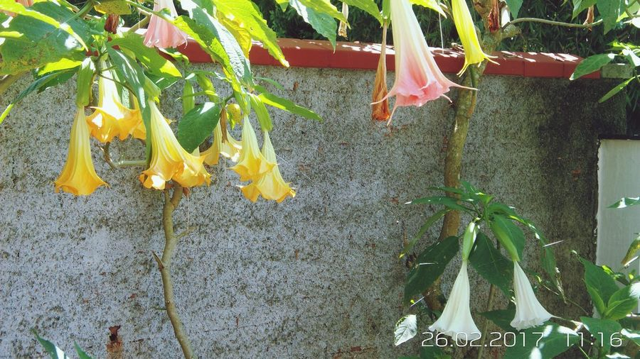 Flores Coloridas No People Nature Day Close-up Tree Plant Freshness Fragility
