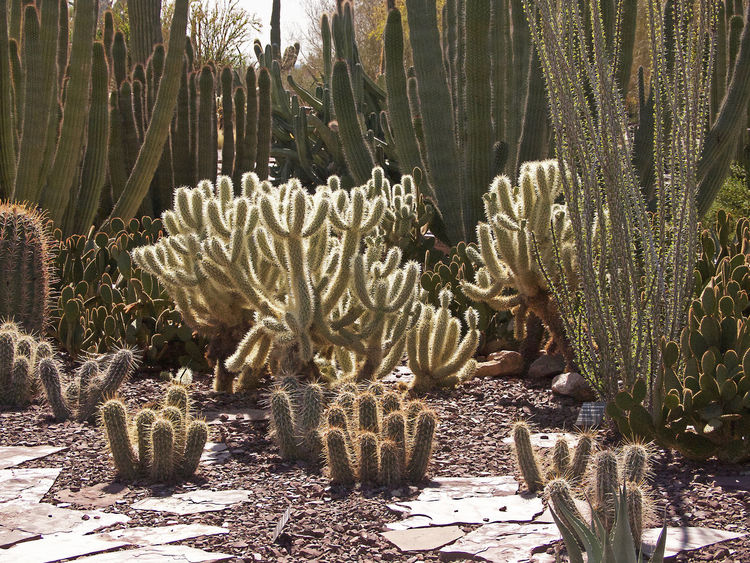 Cactus Day Desert Botanical Garden Multi-colored No People Outdoors Sunlight Variety