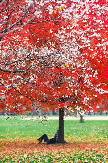 Close-up of maple tree by water