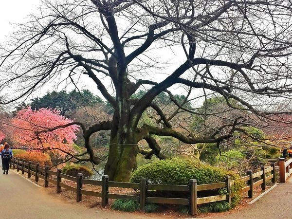 trees and ponds and gardens 🌸🌳🌼🌱🌻 || Trees Gardens Nature Nippon Spring