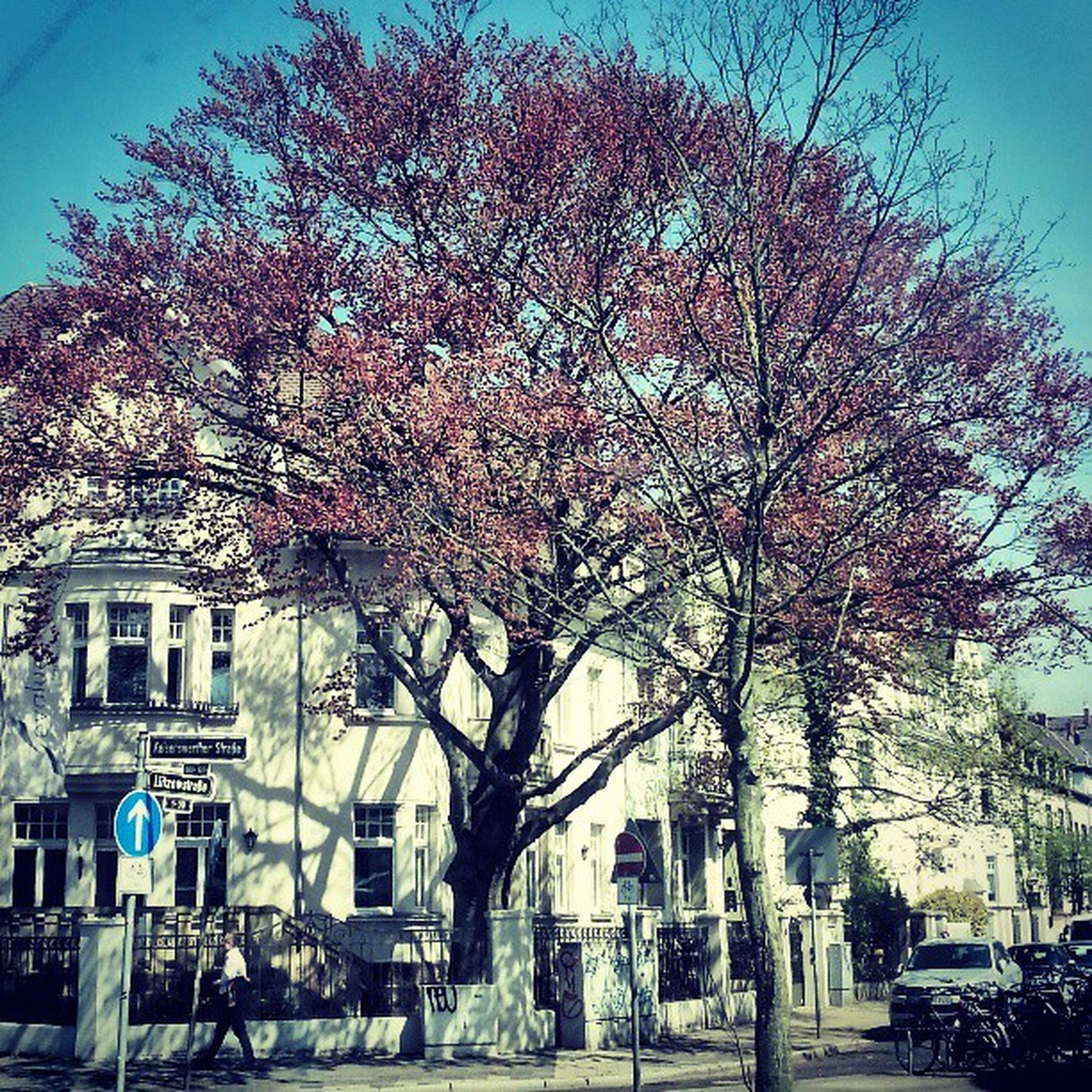 tree, building exterior, architecture, built structure, branch, flower, house, growth, bare tree, day, city, nature, sky, residential building, blossom, residential structure, clear sky, sunlight, outdoors, season
