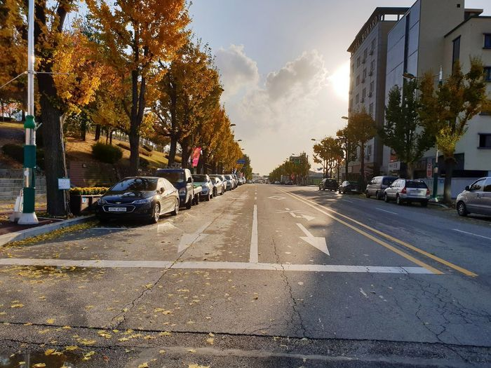 Autumn Autumn colors City Tree Car Road Street Sky Architecture Building Exterior Built Structure Road Marking Zebra Crossing Maple Leaf Fall