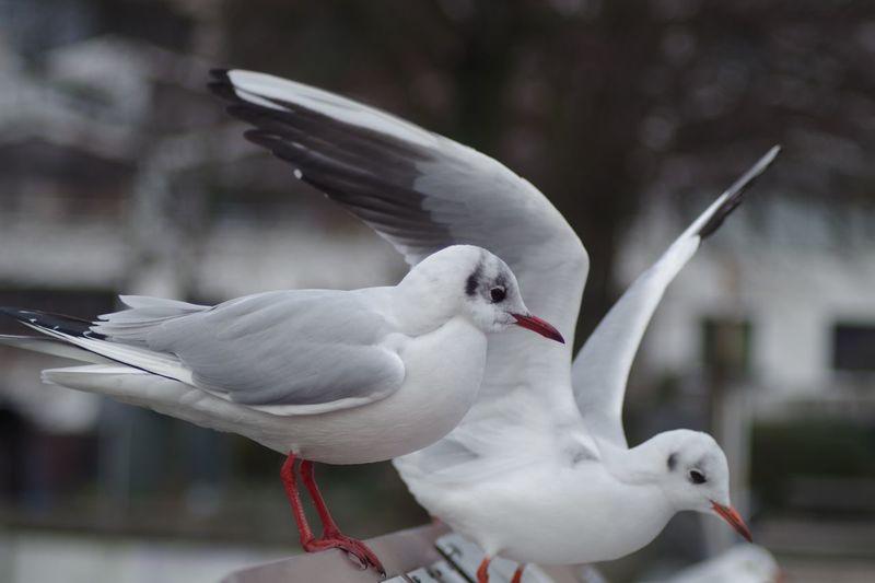 seagul slipping
