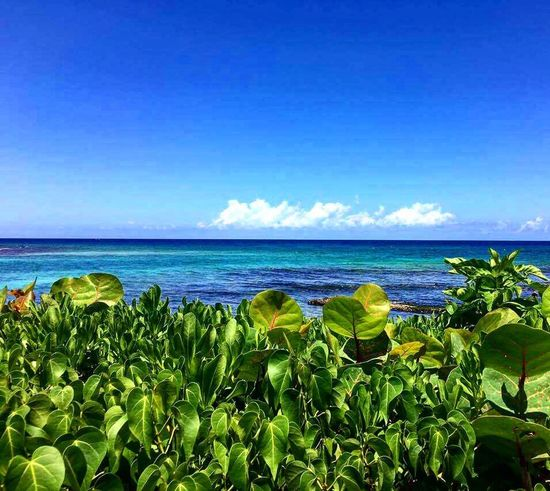 Ocean Sea Blue Beauty In Nature Water Horizon Over Water Growth Tranquil Scene Plant Scenics Copy Space Leaf Sky Tranquility Nature Idyllic Green Color Flower Growing Freshness Day Sommergefühle An Eye For Travel