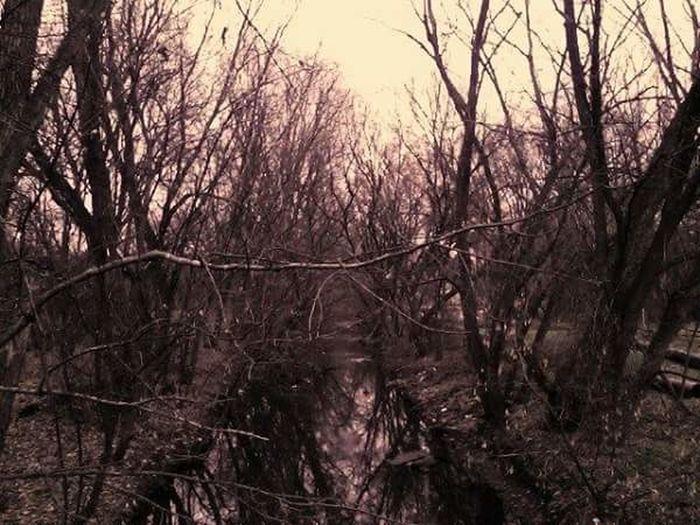 Dark woods Woods Water Stream Bare Tree