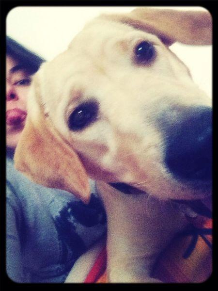 Ilovemydog Mydog MyJoy