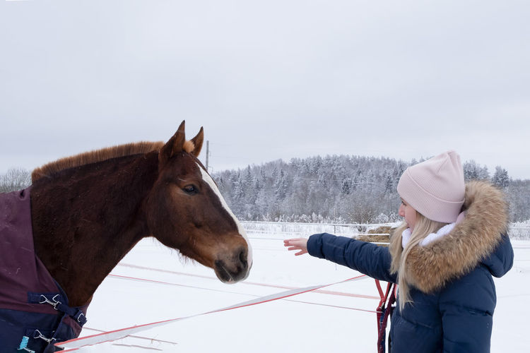 Horse in a winter