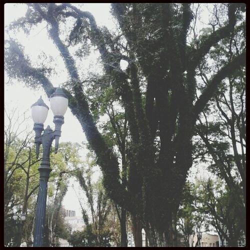 Tree Big Tree Forest
