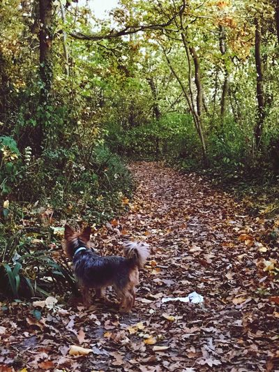 One Animal Animal Themes Domestic Animals Tree Pets Autumn Forest Leaves