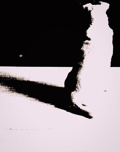 Bolt Animal Love Animal Photography Animals Dog Posing Dog Of The Day Doggy Love Canine Dog Portrait Dogoftheday Animals Are The Best Friends Dogslife Doglover Dog❤ Dog Doggie Dogs Of EyeEm Learn & Shoot: Balancing Elements Blackandwhite Blackandwhite Photography Black And White Collection  Minimalism Balancing Elements